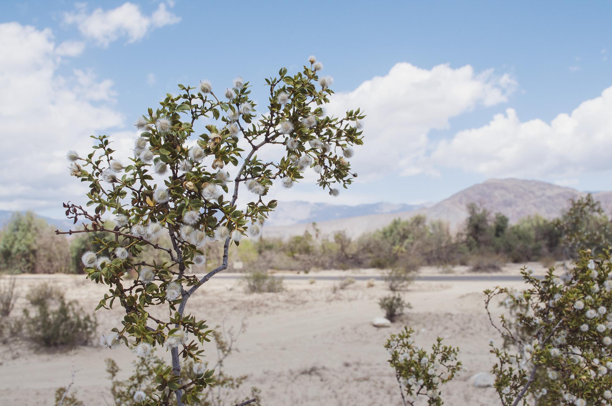 desert-7